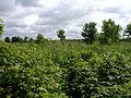 Rodway Hill Farm - geograph.org.uk - 174569.jpg