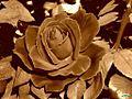Rosa003.en sepia (4554078322).jpg