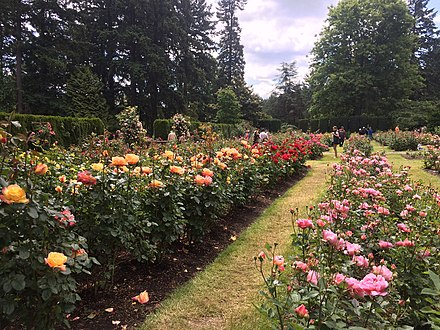 International Rose Test Garden Wikiwand