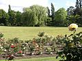 Rose bed at Golders Green Crematorium (160).jpg