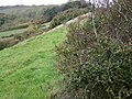 Rough grazing near Milborne Port - geograph.org.uk - 1566095.jpg