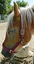 Ruhendes Pferd.jpg