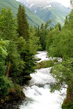 Russian River (Alaska) - Looking up the Russian River