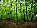 Söderåsen forest.jpg