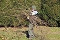 SB VSCC boxwood restoration at Mulberry Hill (15528382474).jpg