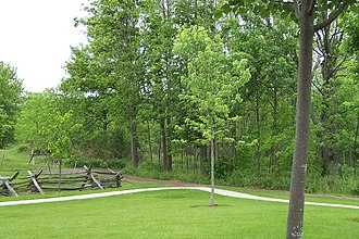 Sacred Grove (Latter Day Saints) - The Sacred Grove—property owned by the LDS Church—is open to visitors.