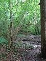 Saint-Sauveur Bois d'Hubermont Pays des Collines.jpg