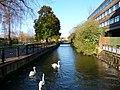 Salisbury - River Avon - geograph.org.uk - 1717051.jpg