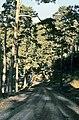San Ildefonso, monte 1974 13.jpg