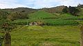 San Vicente cultivo y casa.jpg