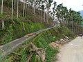 Sancha Keng 三叉坑 - panoramio.jpg