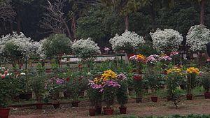 Santiniketan - Santiniketan Garden