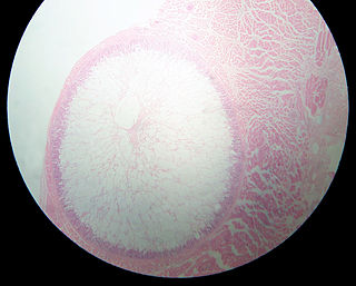 <i>Sarcocystis</i> Genus of protists in the apicomplex phylum
