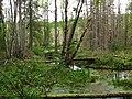 Sarmatic forest Stockholm.JPG