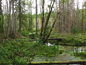 Sarmatic mixed forests - Image: Sarmatic forest Stockholm