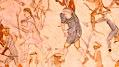 Segesser II hide painting - detail A.jpg