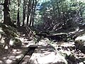 Sentiero Archiforo 2.jpg
