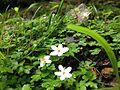 Shei-Pa National Park WANG.GUAN-REN . 007.jpg