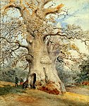 Painting of the Shelton Oak
