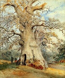 Shelton Oak