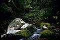 Shenandoah National Park SHEN9161.jpg