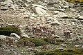 Sierra de Gredos 26-06-2010 16-34-20 3888x2592.jpg