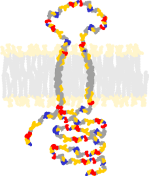 Sigma receptor - Schematic σ receptor