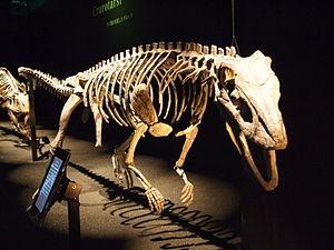 Poposauroidea - Mounted skeleton of Sillosuchus longicervix in Japan