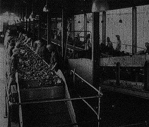 Singareni - Singareni Coal Picking Belt, Photo 1928.