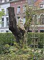Sint-donatuspark.jpg