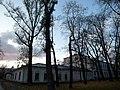 Sky and trees - panoramio.jpg