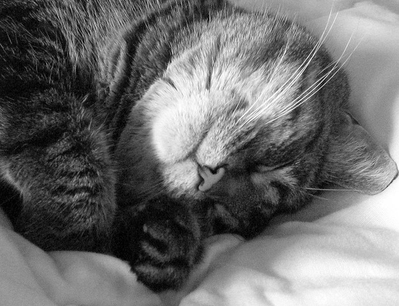 http://upload.wikimedia.org/wikipedia/commons/thumb/7/79/Sleeping_cat_in_black_and_white.jpg/781px-Sleeping_cat_in_black_and_white.jpg