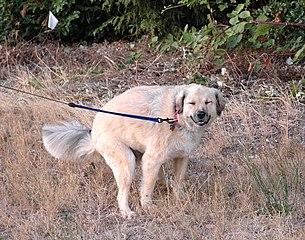 En hund – kanske i nord-sydlig riktning.