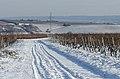 Snow over the Vineyards of Hallgarten and Hattenheim 121208 1.jpg