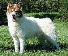 Canadian Eskimo Dog - Wikipedia
