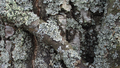 Spring lichens 07.png