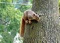 Squirrel 02 (6848236918).jpg