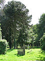 St Margaret's church - churchyard - geograph.org.uk - 855771.jpg