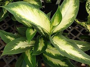 plante interieur depolluante