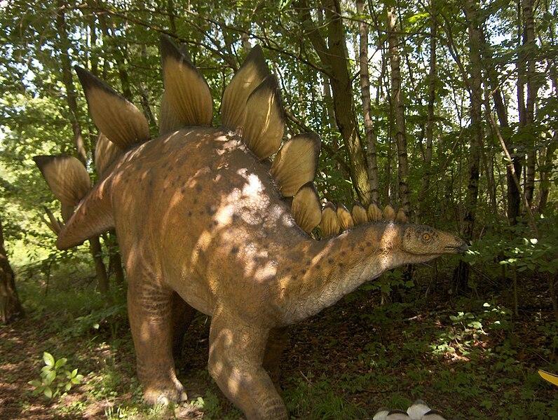 File:Stegosaurusmodell.jpg
