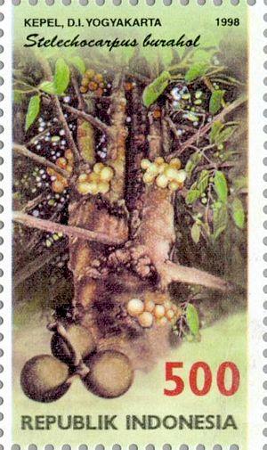 Stelechocarpus burahol - Image: Stelechocarpus burahol 1998 Indonesia stamp