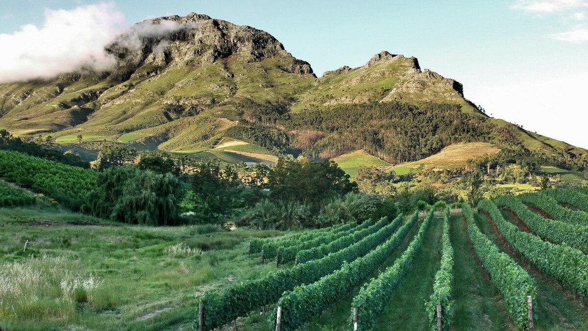 5aa9c71a44e Viticulture en Afrique du Sud — Wikipédia