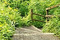Steps, Crawfordsburn Glen - geograph.org.uk - 1366105.jpg