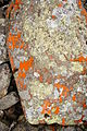 Stone run red yellow lichen.JPG