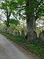 Stone slab fence - geograph.org.uk - 421202.jpg