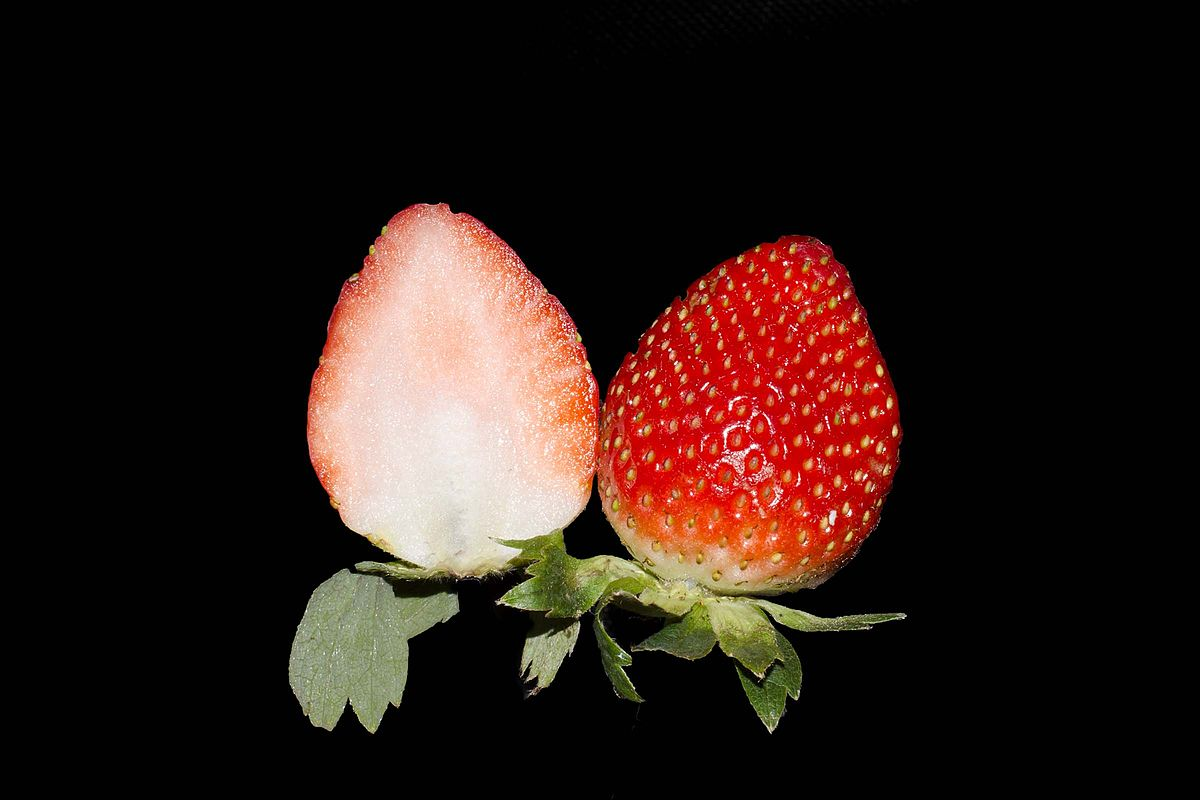 Strawberry Simple English Wikipedia The Free Encyclopedia