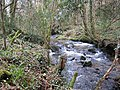 Stream in Hustyn Wood - geograph.org.uk - 727602.jpg