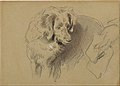 Study of a Dog MET DT9830.jpg