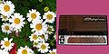 Stylophone Daisies 70s montage.jpg
