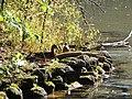 Sulphur Springs Conservation Area (44619291132).jpg
